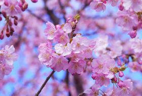 Spring Phrases and Words in English